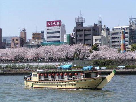 yakatabune and sakura